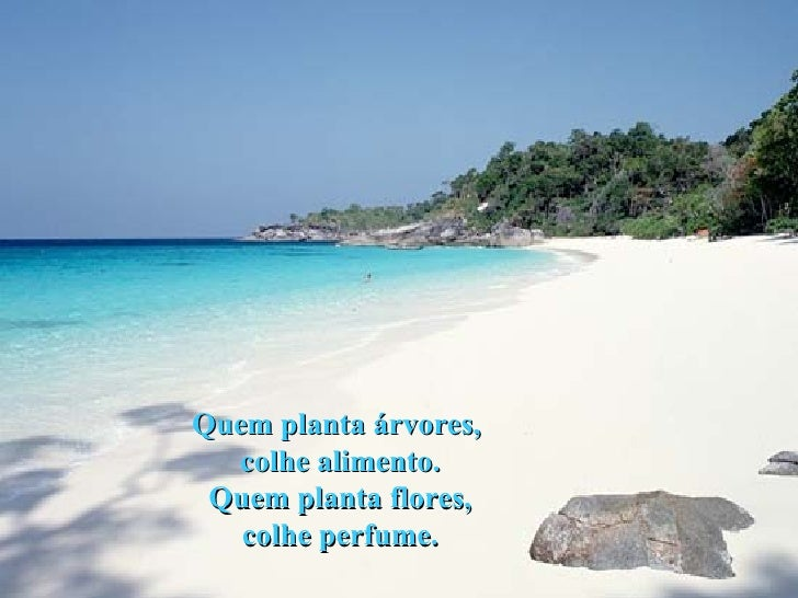 Quem planta árvores,  colhe alimento. Quem planta flores, colhe perfume.