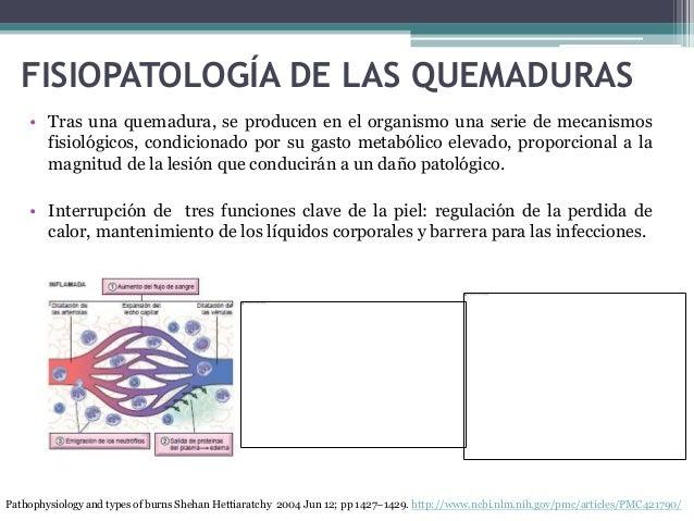 FISIOPATOLOGÍA DE LAS QUEMADURAS • Tras una quemadura, se producen en el organismo una serie de mecanismos fisiológicos, c...