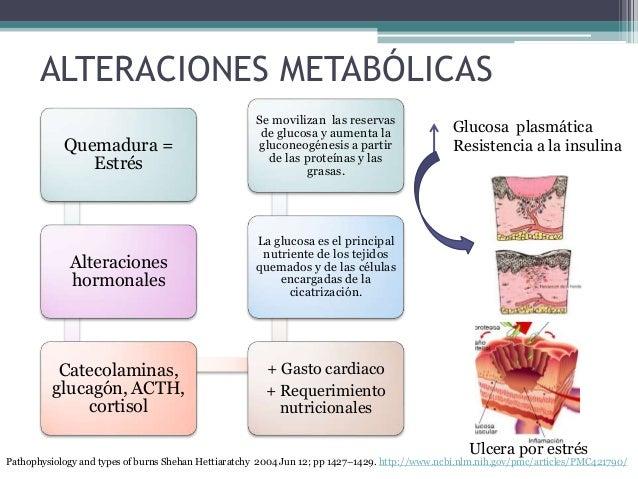 ALTERACIONES METABÓLICAS Quemadura = Estrés Alteraciones hormonales Catecolaminas, glucagón, ACTH, cortisol + Gasto cardia...