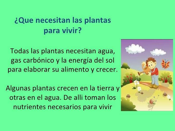 ¿Que necesitan las plantas para vivir? Todas las plantas necesitan agua, gas carbónico y la energía del sol para elaborar ...