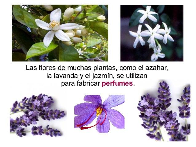 Qu obtenemos de las plantas for Para que se utilizan las plantas ornamentales