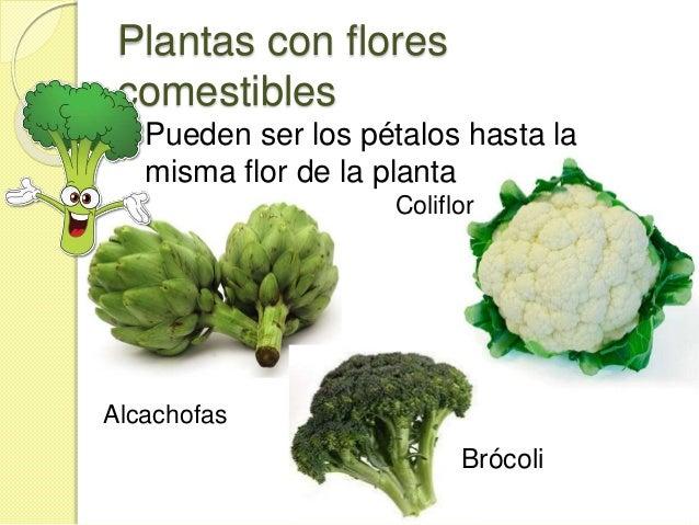 Las partes de la planta que comemos for Plantas hortalizas ejemplos