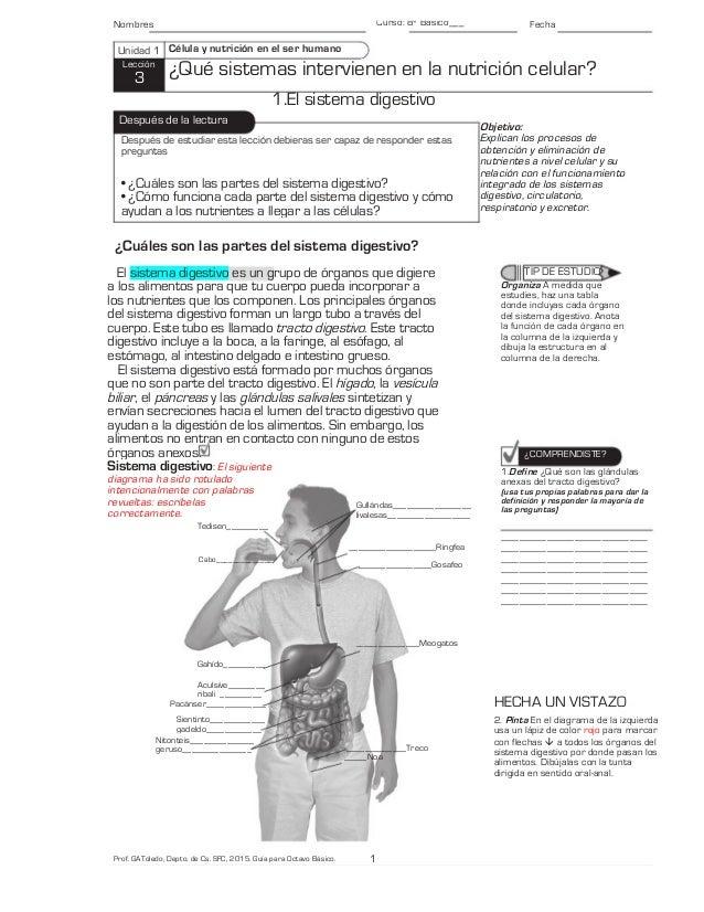 Qué sistemas intervienen en la nutrición celular? Guía para 8º básic…