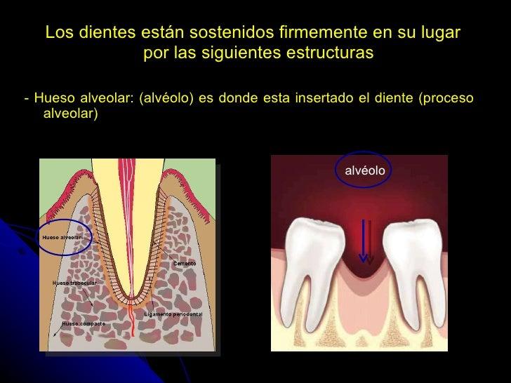 Que es la cavidad oral