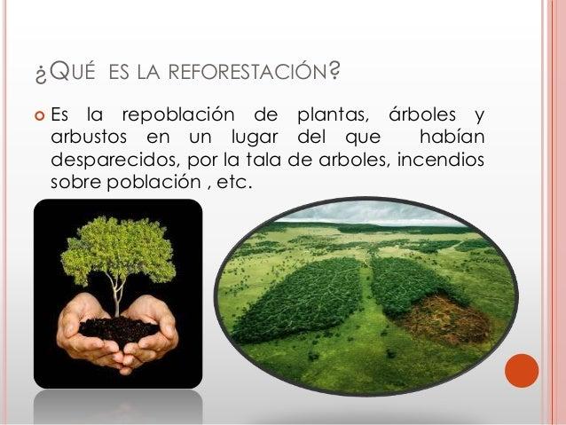 Qu es la germanizaci n de una planta y la forestaci n for Que es un vivero de plantas