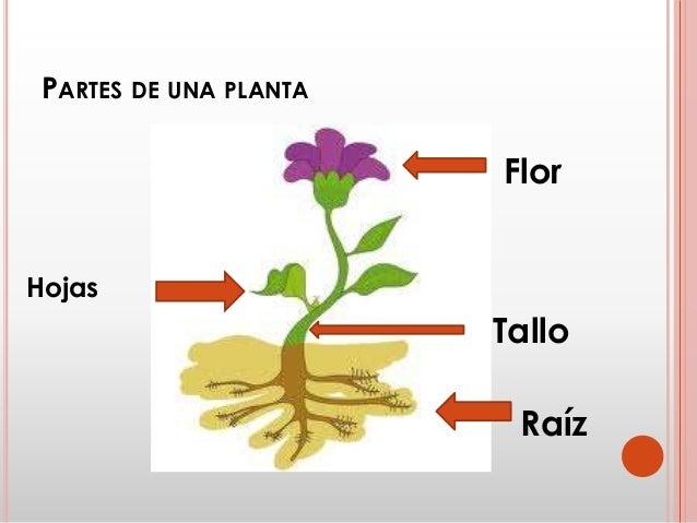 qu es la germinaci n de una planta y reforestaci n