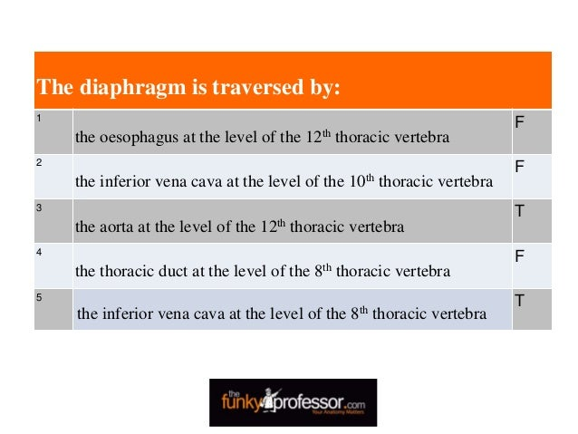 The diaphragm is traversed by: 1 the oesophagus at the level of the 12th thoracic vertebra F 2 the inferior vena cava at t...