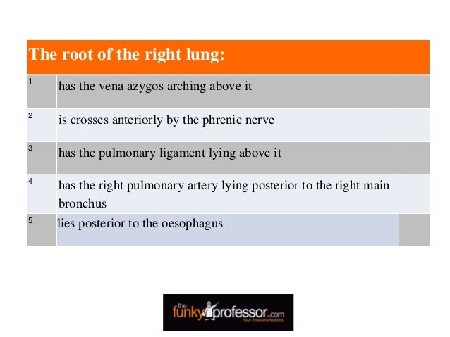 The root of the right lung: 1 has the vena azygos arching above it 2 is crosses anteriorly by the phrenic nerve 3 has the ...