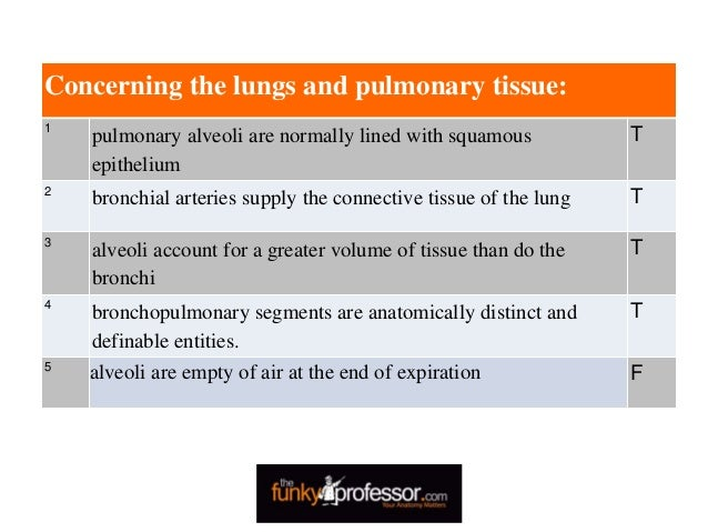 Concerning the lungs and pulmonary tissue: 1 pulmonary alveoli are normally lined with squamous epithelium T 2 bronchial a...