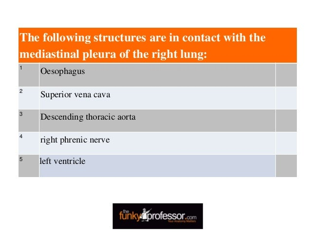 The following structures are in contact with the mediastinal pleura of the right lung: 1 Oesophagus 2 Superior vena cava 3...