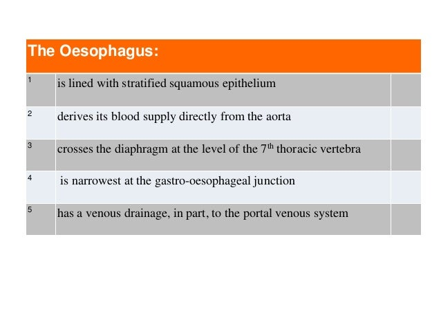 The Oesophagus: 1 is lined with stratified squamous epithelium 2 derives its blood supply directly from the aorta 3 crosse...