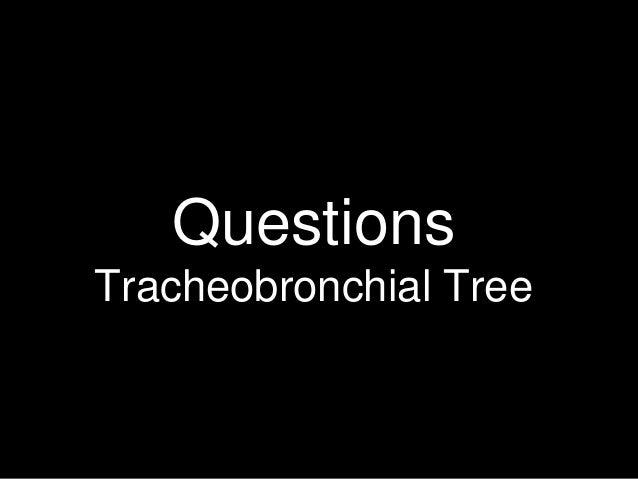 Questions Tracheobronchial Tree