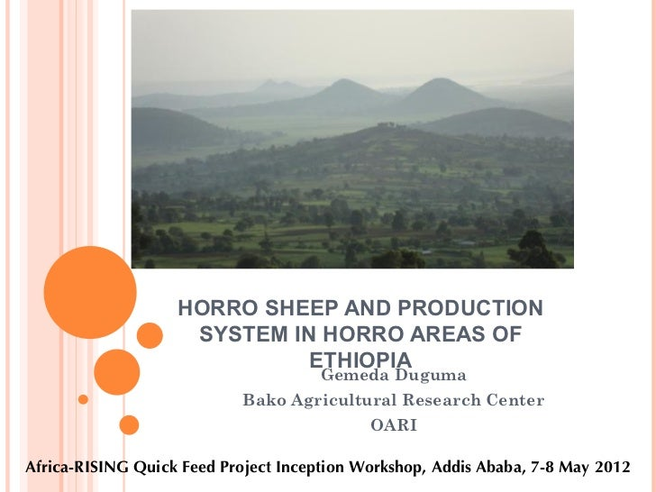 HORRO SHEEP AND PRODUCTION                    SYSTEM IN HORRO AREAS OF                             ETHIOPIA               ...