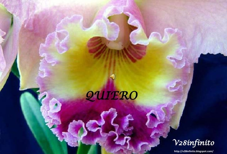 QUIERO <br />V28infinito<br />http://v28infinito.blogspot.com/ <br />