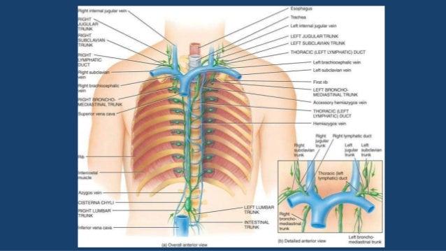 FISIOPATOLOGÍA  Rotura del conducto torácico  T 7  T 7 Conducto torácico: transporta las grasas de la dieta en forma de...