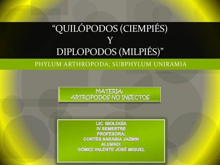 """QUILÓPODOS (CIEMPIÉS)             Y     DIPLOPODOS (MILPIÉS)""PHYLUM ARTHROPODA; SUBPHYLUM UNIRAMIA"