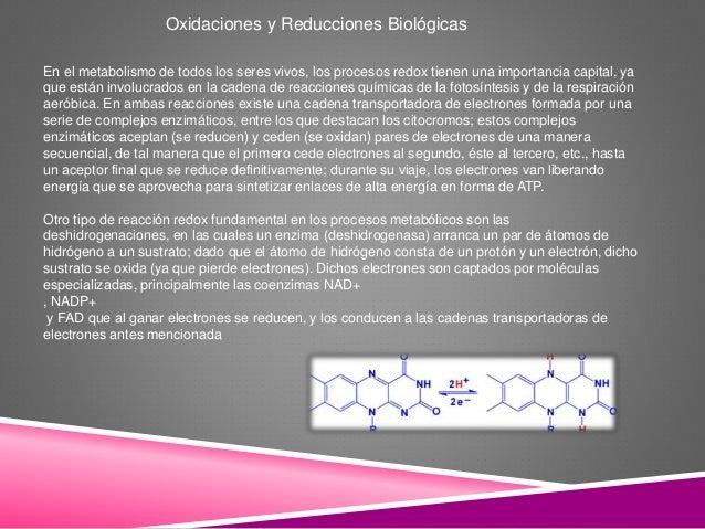 Oxidaciones y Reducciones Biológicas En el metabolismo de todos los seres vivos, los procesos redox tienen una importancia...