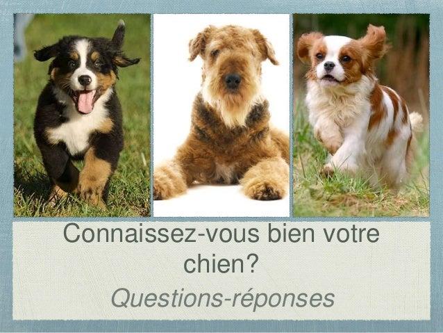 Connaissez-vous bien votre chien? Questions-réponses