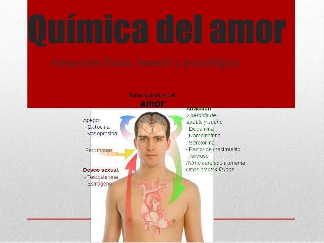 Química del amor Atracción física, mental y psicológica