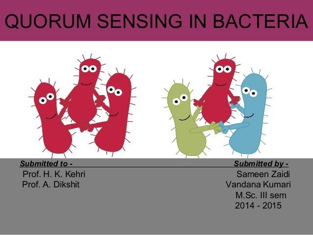 """quorum sensing in bacteria communication equals modification This principle of regulation may be applicable to other bacterial quorum-sensing systems and might be exploited in the development of drugs that disrupt bacterial cooperation abstract the opportunistic pathogen pseudomonas aeruginosa uses a cell-cell communication system termed """"quorum sensing"""" to control production of public goods ."""
