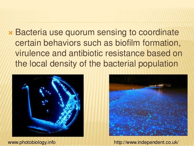 essay on interspecies communication in oral biofilm Interspecies communication in oral biofilm doi: 109790/0853-14626569 wwwiosrjournalsorg 66 | page.