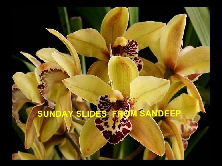 SUNDAY SLIDES  FROM SANDEEP