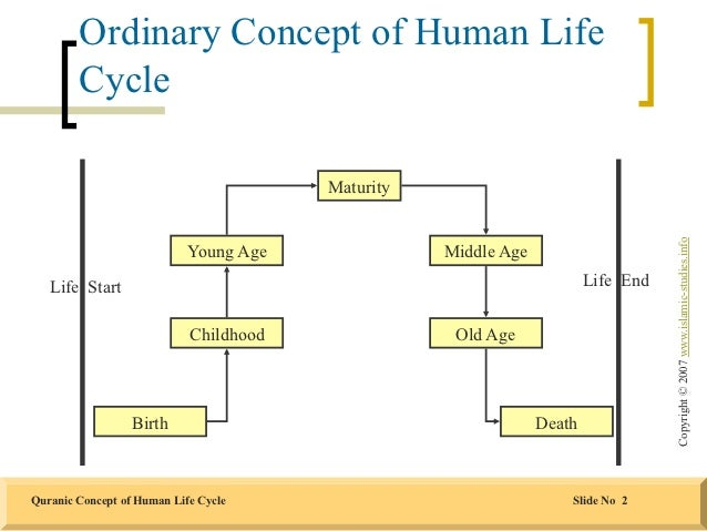 Human life cycle stages ages - photo#51