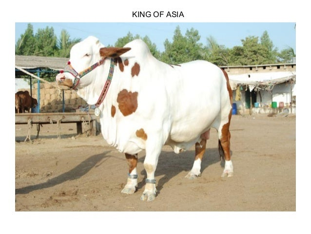 KING OF ASIA