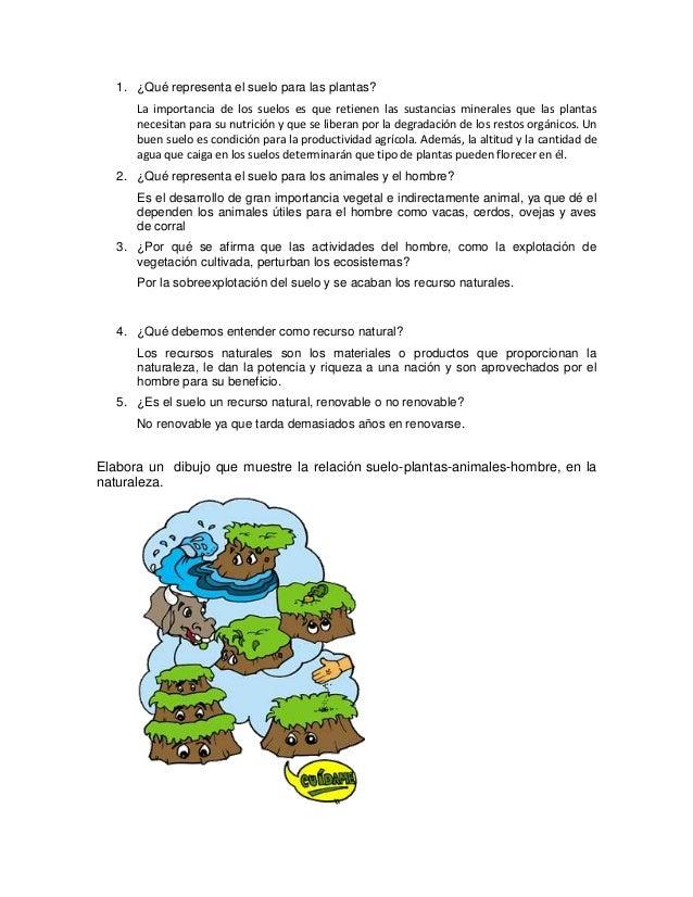 Qu representa el suelo para las plantas for Importancia de los suelos