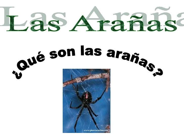 .•   Características de las arañas•   Su alimento•   Sus telarañas•   ¿Cómo hacer una telaraña?•   Las 5 arañas más veneno...