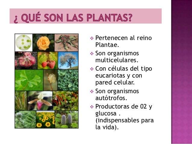 qu son las plantas 1