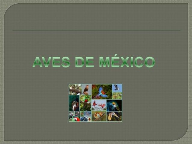  El Quetzal es un ave perteneciente a la familia Trogonidae, que se encuentra en las regiones tropicales de América, prin...