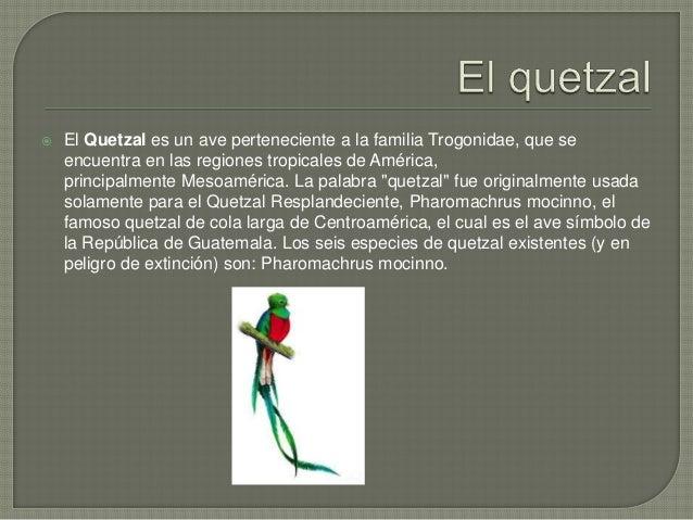  La palabra «quetzal» proviene del náhuatl quetzalli, que puede traducirse como «cola larga de plumas brillantes» (Americ...