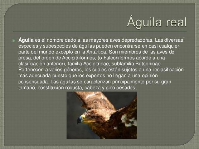  Como todas las aves de presa, las águilas poseen un pico grande, poderoso y puntiagudo para desprender la carne de su pr...