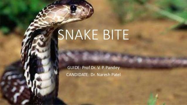 SNAKE BITE GUIDE: Prof Dr. V. P. Pandey CANDIDATE: Dr. Naresh Patel
