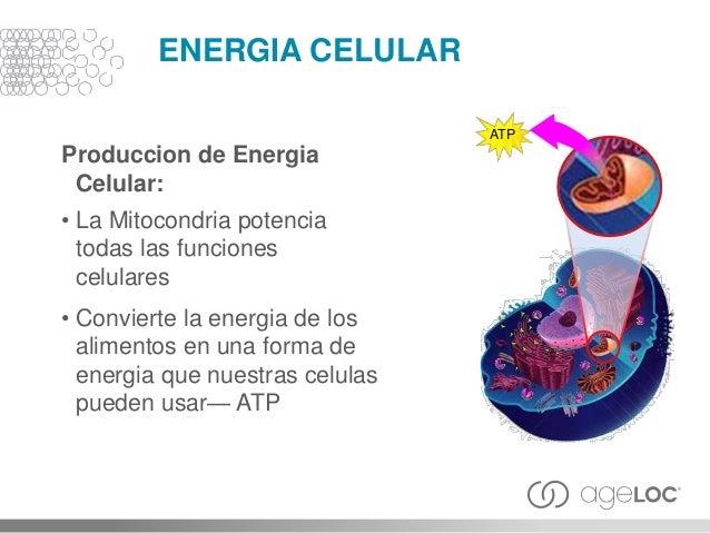 PURIFICACION CELULAR Purification Celular: • Elimina los residuos celulares y subproductops toxicos • Protege la estructur...