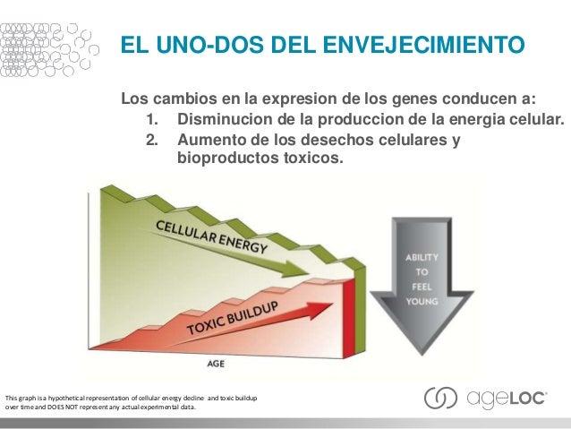EL UNO-DOS DEL ENVEJECIMIENTO Los cambios en la expresion de los genes conducen a: 1. Disminucion de la produccion de la e...