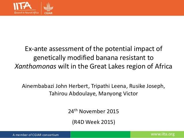 www.iita.orgA member of CGIAR consortium Ex-ante assessment of the potential impact of genetically modified banana resista...