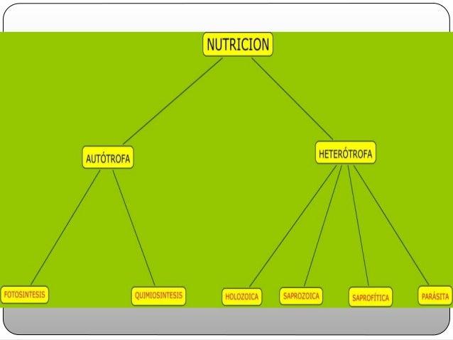 Nutricion atoche Slide 3