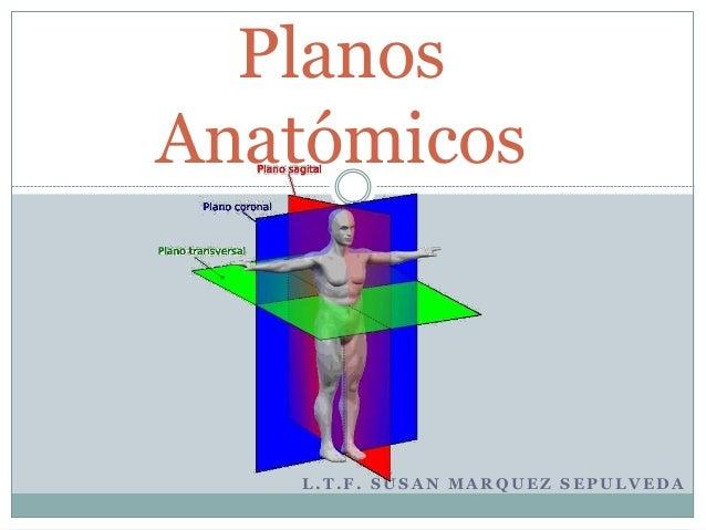 L . T . F . S U S A N M A R Q U E Z S E P U L V E D A Planos Anatómicos