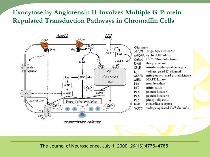 what it is aldosterone? essay Find out how the renin angiotensin system or ras regulates blood pressure and  fluid balance in the body.