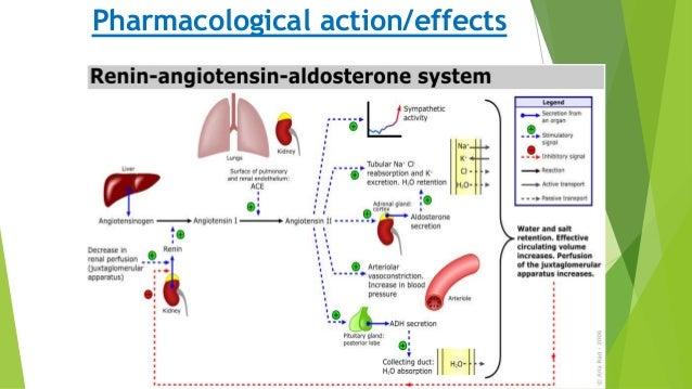Drugs acting on Renin Angiotensin Aldosterone system