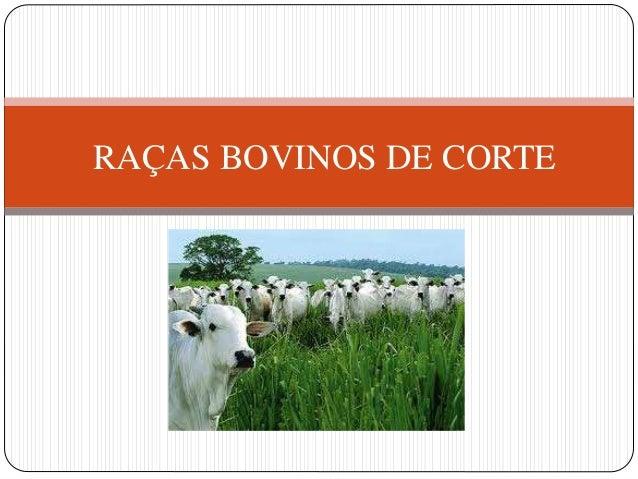 RAÇAS BOVINOS DE CORTE