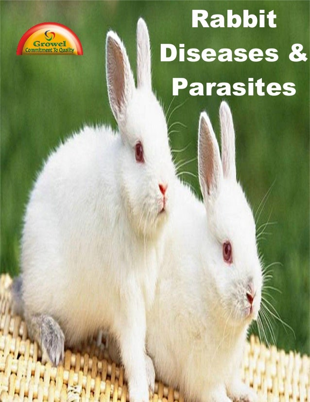 Rabbit Diseases & Parasites