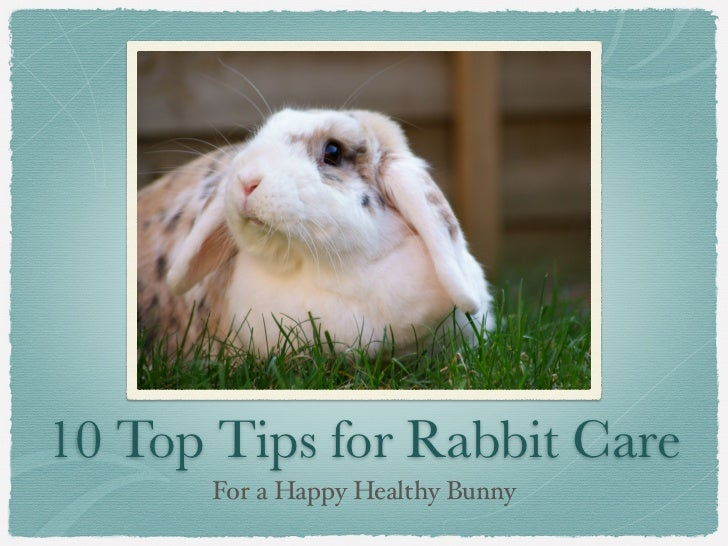 10 Top Tips for Rabbit Care       For a Happy Healthy Bunny