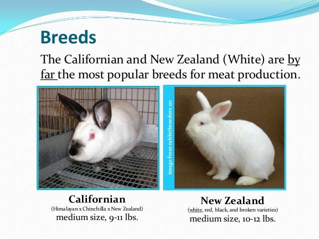 BreedsThe Californian and New Zealand (White) are byfar the most popular breeds for meat production.                      ...