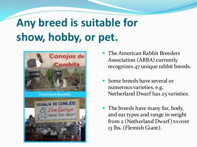 Any breed is suitable forshow, hobby, or pet.                          The American Rabbit Breeders                      ...