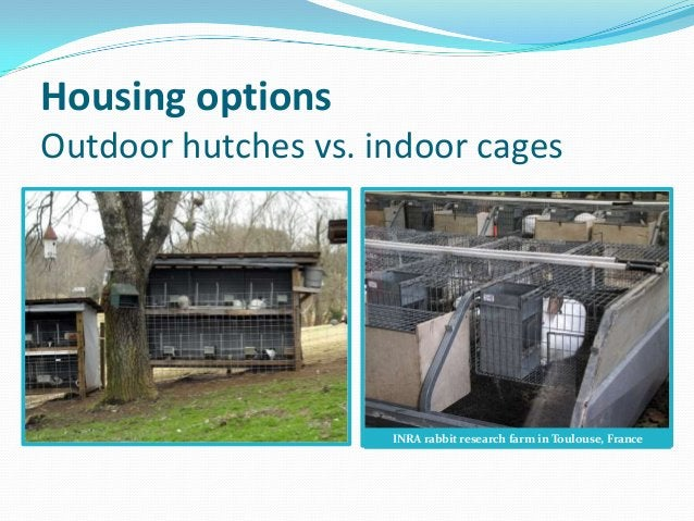Housing optionsOutdoor hutches vs. indoor cages                     INRA rabbit research farm in Toulouse, France