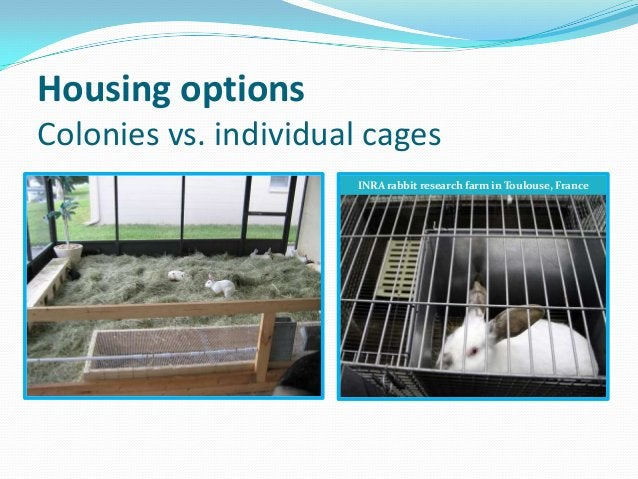 Housing optionsColonies vs. individual cages                      INRA rabbit research farm in Toulouse, France