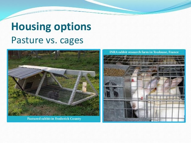 Housing optionsPasture vs. cages                                         INRA rabbit research farm in Toulouse, France   P...